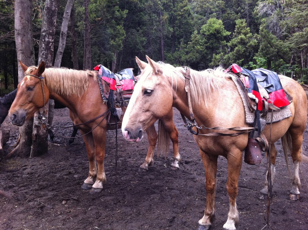 My horse, getting ready for the trail ride