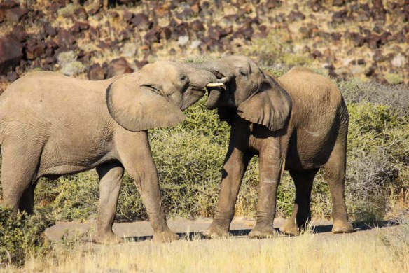Namibia Safari, Desert Elephants